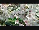 【巡音ルカ】逢花【イロドリ。】