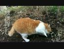 【ニコニコ動画】猫として見られてはいかん所を見られた公園猫の反応を解析してみた