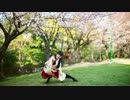 【ニコニコ動画】【足太ぺんた】六兆年と一夜物語 踊ってみた【桜の下で】を解析してみた