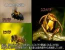 【ニコニコ動画】ゆっくり動物雑学「クマバチが飛べる理由は…」を解析してみた