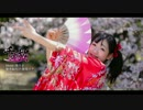 【AMU】千本桜 踊ってみた 【坂道で】