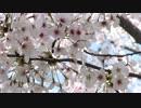 【ニコニコ動画】ST250 春のツーリングを解析してみた