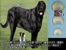 ゆっくり動物雑学「飼い犬用の…」