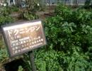 薬用や有毒植物がある 星薬科大学の薬用植物園