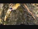 【ニコニコ動画】【ゆっくり釣り動画】まったり隊の渓流釣り ー2匹目ーを解析してみた