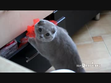 イタズラしてるところを目撃された猫の反応
