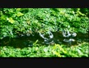 ぴちゃぴちゃraindropを撮った thumbnail