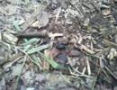 雑木林でよく見かける黒い虫を追いかけてみたって