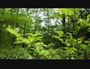 【環境音】沢沿いの森の中【初夏】.mp4