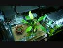 【ニコニコ動画】ストック水槽の見栄えがアレな件についてを解析してみた