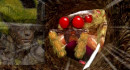 【地球防衛軍4】人は拾った武器だけで防衛できるか?76【ゆっくり実況】 thumbnail