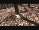 【ニコニコ動画】カメ五郎の狩猟生活(その14)を解析してみた