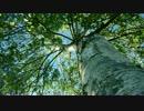 【ニコニコ動画】【4K】 三次 ニコニコベンチマーク(短) 【軽量版】を解析してみた