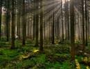 【ニコニコ動画】【艦これ】時津風の森を解析してみた
