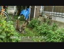 【ニコニコ動画】道すがら、猫時空に迷い込んでしまったを解析してみた