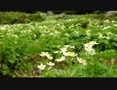 【ニコニコ動画】日本百名山に登ってみた12B 乗鞍岳編を解析してみた