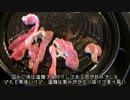【ニコニコ動画】【CBR250R】転職するのでCBR250Rで日本一周 3【栃木~福島】を解析してみた