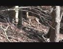 【ニコニコ動画】カメ五郎の狩猟生活(その23)を解析してみた