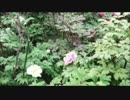 【ニコニコ動画】【歌ってみた】 HANA 【無編集】.mp4を解析してみた