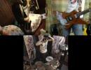 【ニコニコ動画】【勝手にセッション】ウッーウッーウマウマ(゚∀゚)【バンドスコア付】を解析してみた