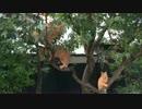 【茶番】猫がなる新種の樹木を公園で発見