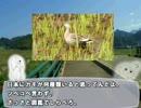 【ニコニコ動画】やる夫と学ぶ【野鳥を見分けるコツ】前編を解析してみた