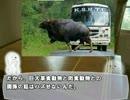 第80位:【ゆっくり解説】やる夫で学ぶ巨大生物5【ガウル】 thumbnail