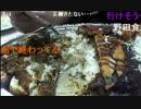 【ニコニコ動画】20141122 暗黒放送 生放送中に2500gジャンボカレーを食う放送 1/3を解析してみた