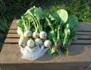【ニコニコ動画】市民農園を借りて野菜を作ってみる【12週目】を解析してみた
