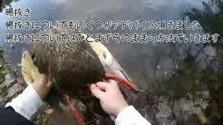 カモ猟番外編2 新米猟師ハンターライフ【散弾銃】