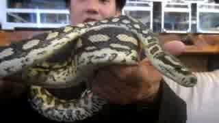 ヘビカフェ『東京スネークセンター』で蛇を首に巻いて来ました☆