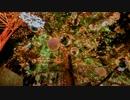 【ニコニコ動画】【ラブライブ!】「Silent tonight」アコギアレンジ【BD全巻特典】を解析してみた