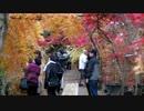 【ニコニコ動画】川口安行の紅葉巡りを解析してみた