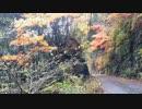 【ニコニコ動画】【すべて担いで】ソロキャンプ【痕跡を残さない】を解析してみた