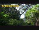 【ミッション】二泊三日ヤンバルの旅【大連続討伐】