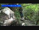 【クワガタ】二泊三日ヤンバルの旅3話【スプライトバナナ】 thumbnail
