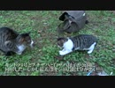抗争中の猫一家、まさかの停戦で猫時空を完成させる