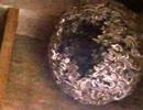 【ニコニコ動画】2/4 分断する瞬間は必見!特大の蜂の巣に乱射してみた!を解析してみた