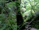 【ニコニコ動画】夏休みバイクツーリング ③ - もののけ姫の森を抜けて -を解析してみた