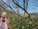 桜の季節 伊吹を歩く 26
