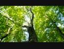 【ニコニコ動画】日本二百名山に登ってみた43 白神岳編を解析してみた