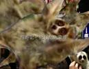 【ニコニコ動画】西遊記と化した先輩達.tennsei3を解析してみた