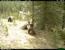 【ニコニコ動画】【閲覧注意】クマたちのポールダンス?なんで練習してるんだろwを解析してみた