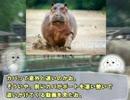 【ニコニコ動画】【ゆっくり解説】やる夫で学ぶ巨大生物12【カバ】を解析してみた