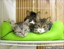 【ニコニコ動画】はじめての猫飼い078~猫ベッド~を解析してみた