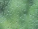 雨音がBGMのクラシックメドレー