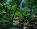 【ニコニコ動画】植物の世界1『旅をする種子』前半を解析してみた