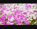 【ファミコン風】花は咲く
