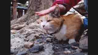ハシケン 外配信で出会ったネコたち 14