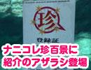 【水族館】ナニコレ珍百景で紹介されたアザラシ登場!【アクアワールド】